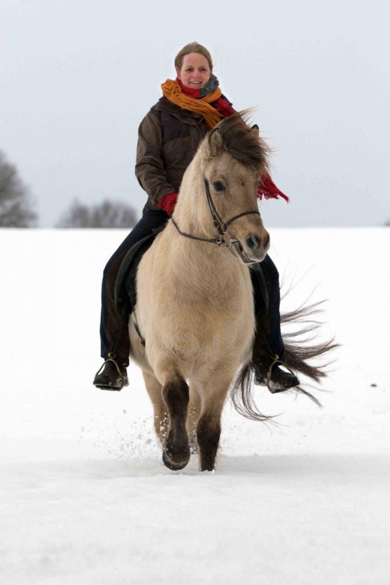 Im Schnee unterwegsw mit Islandpferd Alrun.