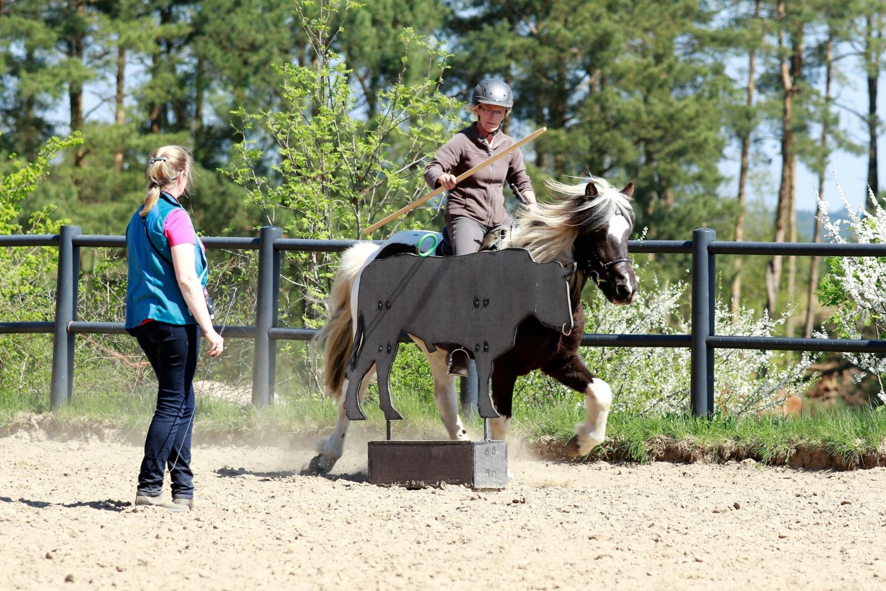 Kaja Stührenberg beim Working Equitation Unterricht