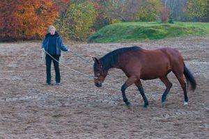 Kaja Stührenberg mit Pferd an der Longe.