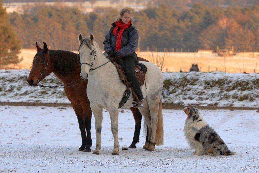 Kaja Stührenberg Paso Iberos plus Hund
